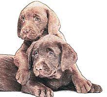 Chocolate Lab puppies by Jackie Popp