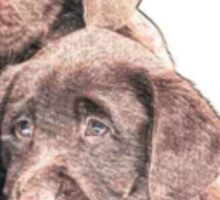 Chocolate Lab puppies Sticker