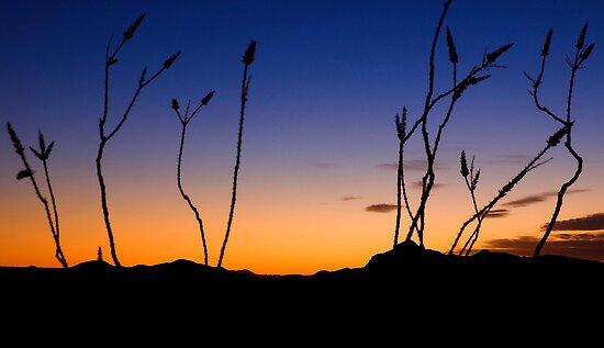 Texas Sunset by Tamas Bakos