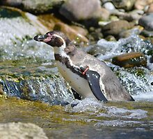 Penguin in the Water by LouiseMatchett