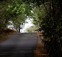 One Road Taken by tcphoto