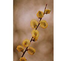 Pollen laden Photographic Print