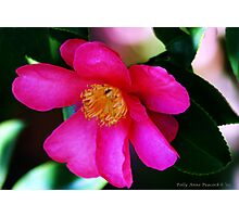 Blossoming Beauty Photographic Print
