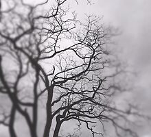 Autumn Tree by jessealveo