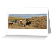 Dartmoor: Ponies at Sandy Hole Pass Greeting Card