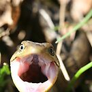 Mad Alligator Lizard! by SKNickel