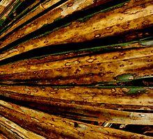 Rusty Leaves  by Maris Stanley