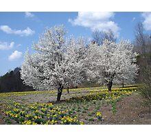 Spring at Dillsboro Exit Photographic Print