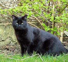 Topsy, the Garden Panther by Kat Simmons