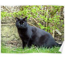 Topsy, the Garden Panther Poster