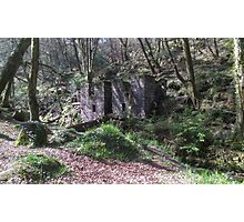 Kennall vale Woods - Cornwall Photographic Print