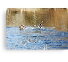 CHASE ME!  CHASE ME! Canvas Print