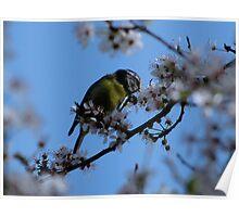 Enjoying the blossom Poster