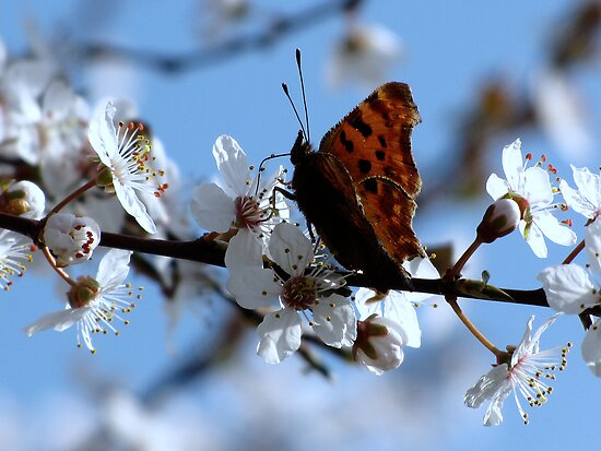 Enjoying the blossom too by Sharon Perrett