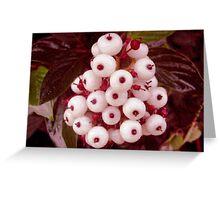White Pearl Greeting Card