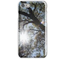 Oak tree brunches with sunshine and lens flare iPhone Case/Skin