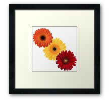 Triple Daisy Framed Print
