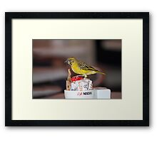 Cute little sugar thief Framed Print