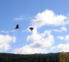 Turkeys in flight  by Lesley Ortiz