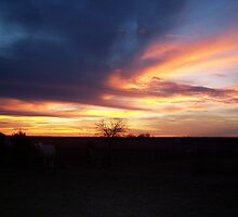 Sunset in the Pasture by seemyshots