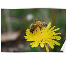 My Friend the Bee Poster