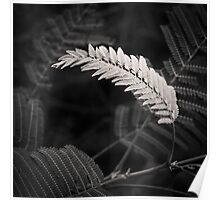 lonely fern Poster
