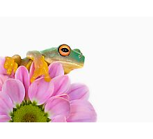 Little Frog... Photographic Print