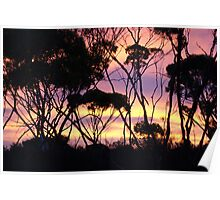 Mallee Sunset Poster