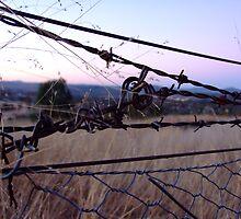 Tangled Web by bumbletigger