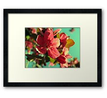 Vintage Bloom Framed Print