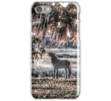 Nibbling on Spanish Moss iPhone Case/Skin