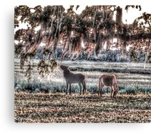 Nibbling on Spanish Moss Canvas Print