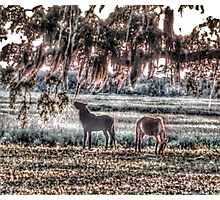 Nibbling on Spanish Moss Photographic Print
