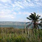 Kinnereth Lake by Nira Dabush