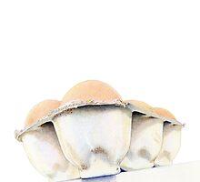 Egg Carton by Mariana Musa