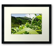 Elevated Cultivation Framed Print
