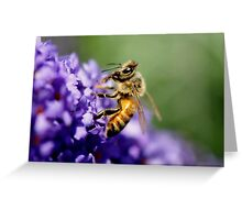 Bee IV Greeting Card