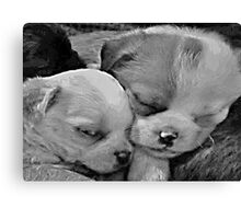 Sleeping Cuties Canvas Print