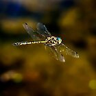 Dragon Fly on the Move by Chris  Randall