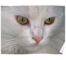 Street Cat  Poster