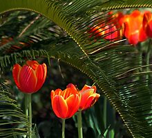 Red Tulips Under a Palmetto Tree by Catherine Sherman