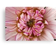 Dahlia close up Canvas Print