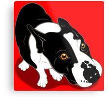 Mr Bull Terrier  Metal Print