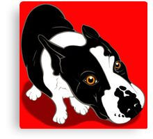 Mr Bull Terrier  Canvas Print