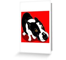 Mr Bull Terrier  Greeting Card