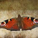 Fluttterby Butterfly by Pamela Jayne Smith