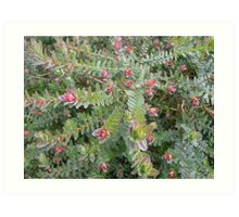 Macro of Darwinia Citriodora,(Lemon Scented Myrtle) Art Print