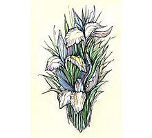 Beautiful iris - watercolor on textured paper Photographic Print