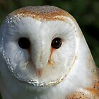 Barn owl by Keith Jones