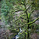 mountain stream by Bruce  Dickson